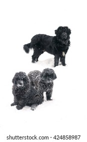 Newfoundland puppies with their mother isolated in the snow