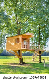 Newly built  dutch wooden tree hut in oak trees with meadow
