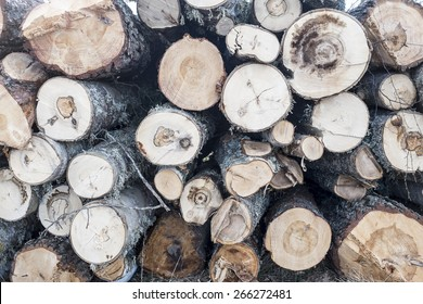 Newly cut down logs stacked