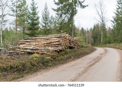 Newly harvested birch pulpwood in a pile by a country roadside