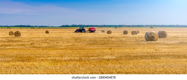 Newly harvested wheat field with large round straw bales resting on bristles and blue sky. Background texture after havest.