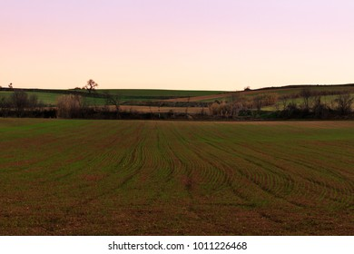 The newly planted fields begin to see corn grow at sunset