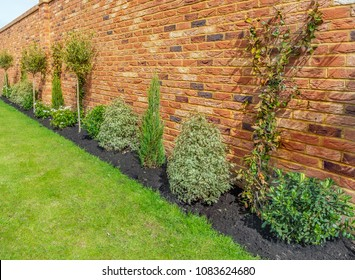 newly planted garden or back yard of hardy trees, shrubs and creepers along a bedding in front of an impressive red brick surrounding wall