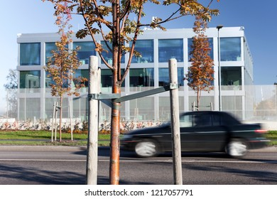 Newly planted rowan trees at roadside on sunny autumn day, office building at background and black car driving by on asphalt road.