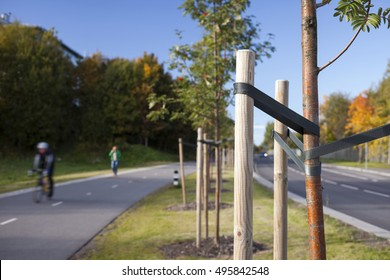 Newly planted trees at roadside, with supporting stakes. Focus on stake, people are blurred.