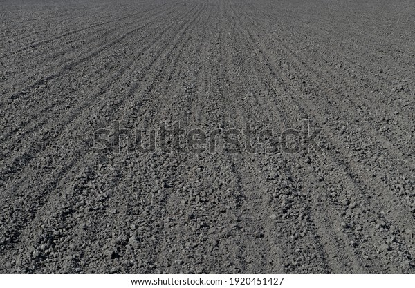 newly-sown-wheat-field-humus-600w-192045