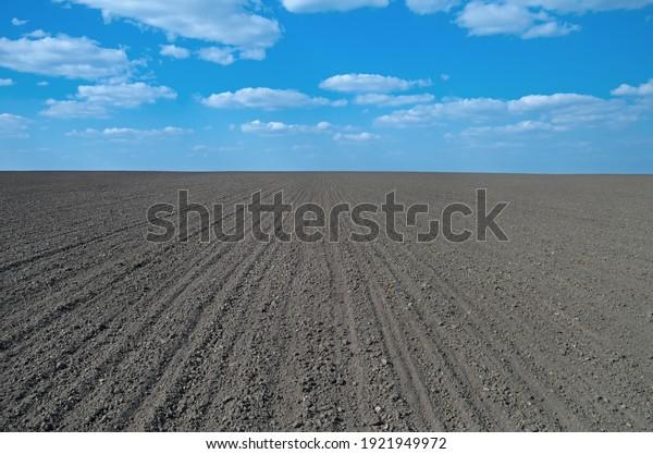 newly-sown-wheat-field-humus-600w-192194