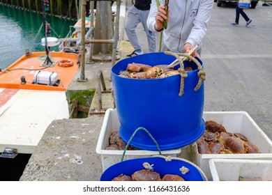 NEWLYN, ENGLAND - JUNE 20: Fisherman with crab catch in Newlyn harbour, England. In Newlyn, Cornwall, England. On 20th June 2018.