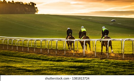 Newmarket Town in England is the racehorse capital of the world for breeding and training dating back 350 years. Training can be seen 6 days a week on Warren Hill.