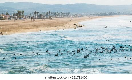 Newport Beach California 2. The coastline of Newport Beach, California on a hazy sunny morning with sea birds in the pacific ocean waves.