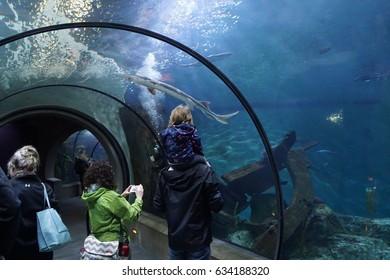 NEWPORT, OREGON - APR 22, 2017 - Tourists explore sealife underwater from a glass tunnel,  Newport, Oregon