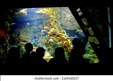 NEWPORT, OREGON Field trip students watch as fish are fed in the aquarium at  Newport, Oregon