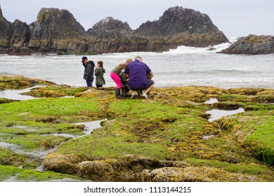 NEWPORT, OREGON - MAY 20, 2018 - Young family explores tide pools at Seal Rock beach,  Newport, Oregon