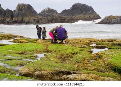 NEWPORT, OREGON - MAY 20, 2018 - Young family explores tide pools at Seal Rock beach,  Newport, Oregon
