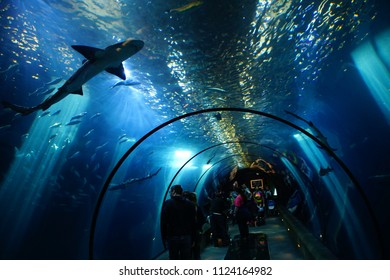 NEWPORT, OREGON - MAY 22, 2018 - Visitors watch sharks and other fish in a walkthrough tunnell under water,