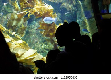 NEWPORT, OREGON - MAY 22, 2018 - Field trip students watch as fish are fed in the aquarium at  Newport, Oregon