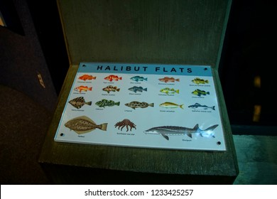 NEWPORT, OREGON - MAY 22, 2018 - Flounder, halibut and other fish chart, Newport, Oregon