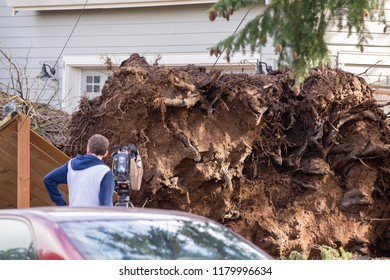 News reporter standing near an uprooted tree after the storm damage.