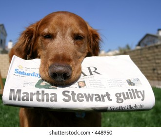 Newspaper dog
