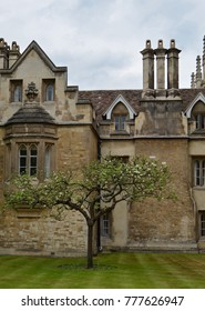 Newton's Apple Tree at Porter's Lodge, Cambridge