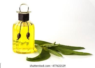 Ngai Camphor Tree (Blumea balsamifera DC.) Essential Oils.