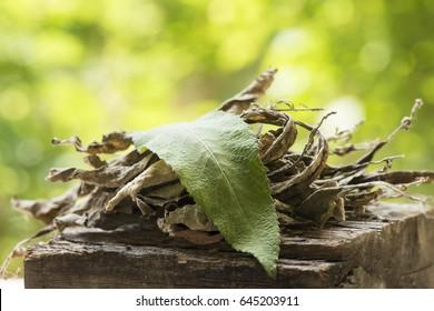 Ngai Camphor Tree, Camphor Tree (Fresh and Dry Leaves) Medicinal properties.