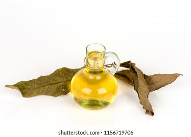 Ngai Camphor Tree,green leaves have property medicine.(oil extract from dried leaves)