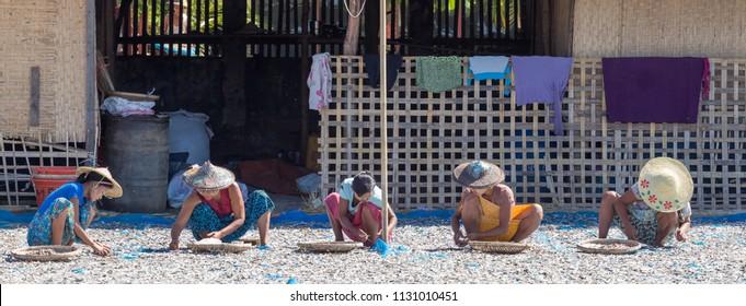 NGAPALI, MYANMAR - DECEMBER 03, 2014: women drying sea fish on the beach in Thandwe village, Ngapali beach, Myanmar