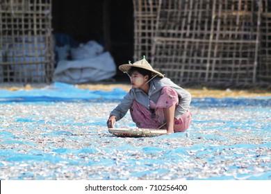 NGAPALI, MYANMAR - December 2014: Myanmar fishing village. Myanmar woman drying sea fish on the beach in Ngapali village in Myanmar, Andaman sea