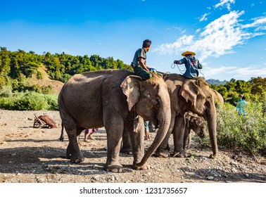 NGAPALI, MYANMAR - JANUARY 6, 2017: People riding elephant in the at the Green Hill Valley Elephant Camp Kalaw, Myanmar Burma