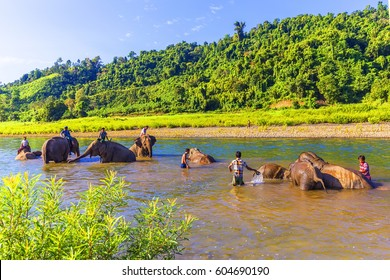 NGAPALI, MYANMAR - JANUARY 6, 2017: Mahout bathing a rescued logging elephant in the stream at the Green Hill Valley Elephant Camp Kalaw, Myanmar Burma