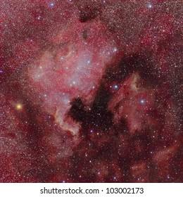 NGC 7000 / IC 5070