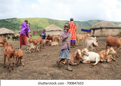 Ngorongoro /Tanzania- March, 2016 : Daily life of Masai people and their livestock in a village near Ngorongoro Crater