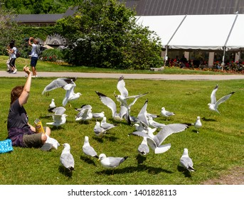 Niagara on the Lake, Ontario, Canada - June 15, 2018: Cute little boy feeding seagulls on Niagara-on-the-lake holiday vacation.
