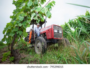 Niagara on the Lake, Ontario Canada July 1, 2010 Mexican migrant worker drives a tractor while tending to vines at a vineyard in Niagara on the Lake