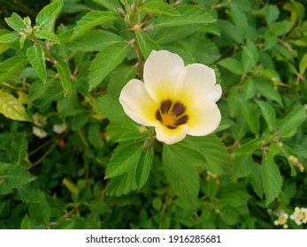 Nice and Attractive white flowers on top of green leaves are great for decoration