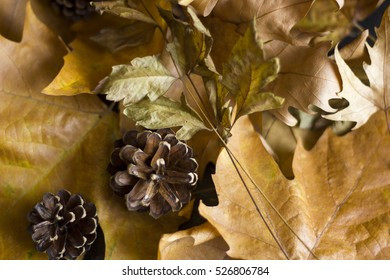 A nice autumn composition with leaves and pine cone.