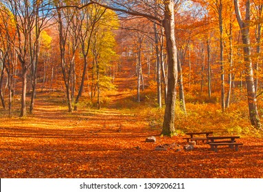 Nice autumnal scene in the forest