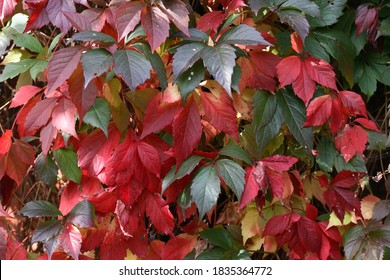 Nice background with various multicolored  autumn leaves