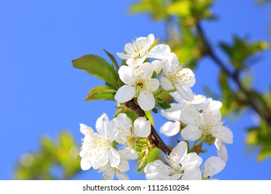 nice blooming tree branch in spring day