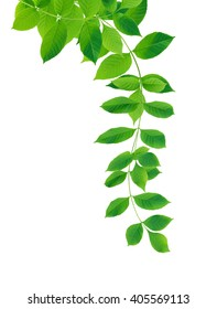 Nice border made from green leaves on white background