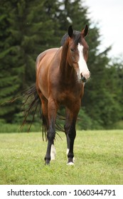 Nice brown horse standing and looking at you
