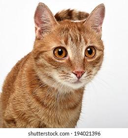 Nice cat portrait in white studio