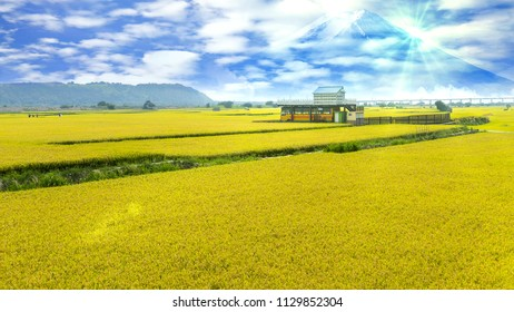 The nice color with paddy field (rice place)