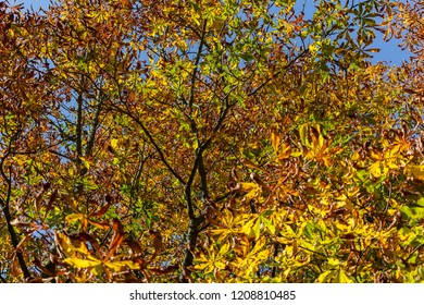 Nice colorful autumn leaves in treetop with blue sky