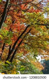 Nice colorful autumn leaves in treetop