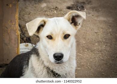 Nice cute dog
