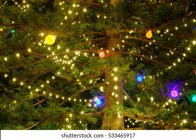 Nice decoration on Christmas Tree. It's real huge pine.