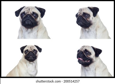 Nice dog with four different images isolated on a white background