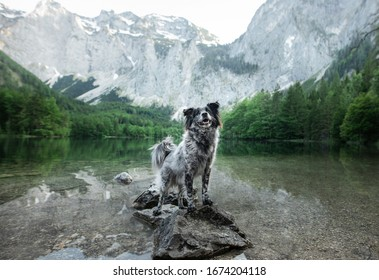 nice dog in nature, a background of a beautiful landscape. pet by the mountain lake.